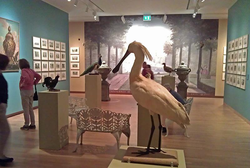 Lepelaar in het Dordrechts Museum