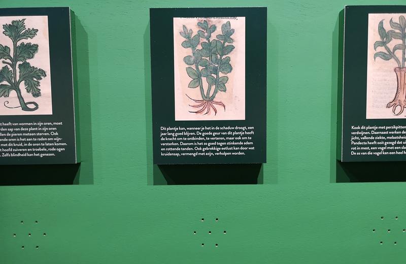 Zoek geur en beschrijving van een kruid bij elkaar! Foto auteur