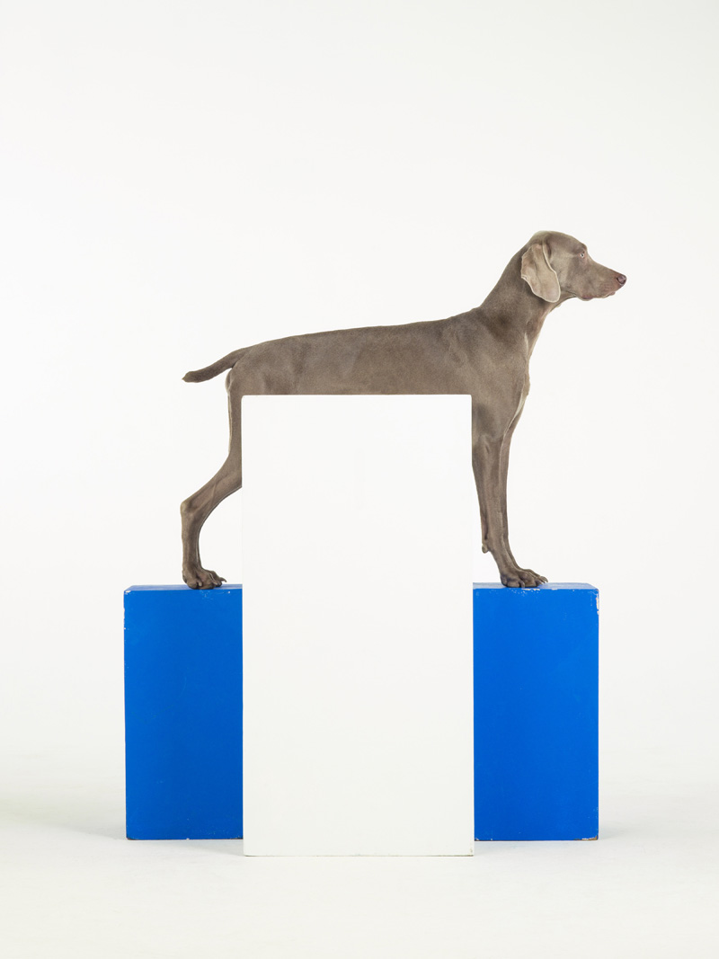 William Wegman, White Out (2014)