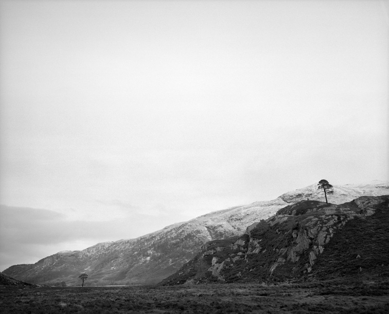 BOREALIS Schotland, februari 2017 - Two Granny Pines © Jeroen Toirkens - Courtesy Kahmann Gallery